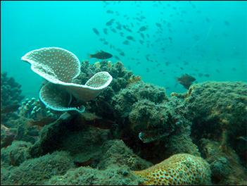 Saving Davao Gulf