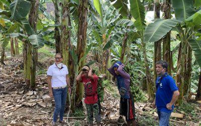 Cardava buyer Hijo trains farmers